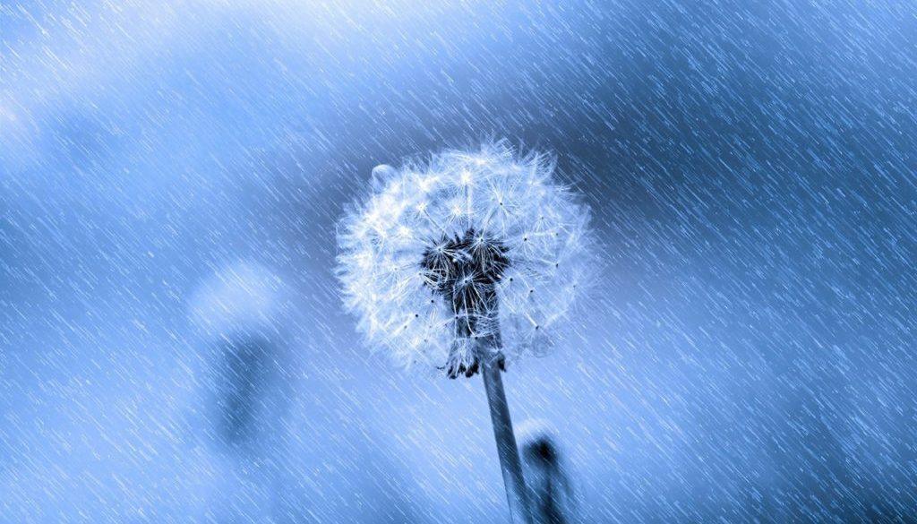 flower-315457_1280